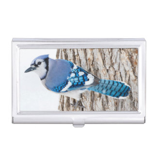 Wichita County, Texas. Blue Jay 4 Business Card Holder