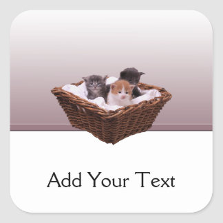 Wicker Basket with Kittens Square Sticker