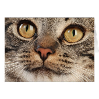 Wide-Eyed Tabby Cat Card
