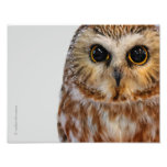 Wide-Eyed with Wonder: Saw Whet Owl Photograph