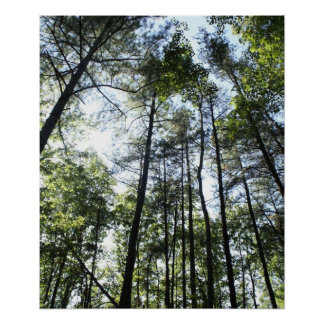 Widewater Trees in the sun Poster