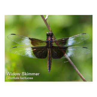Widow Skimmer Postcard