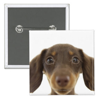 Wiener Dog (brown) 2 2 Inch Square Button