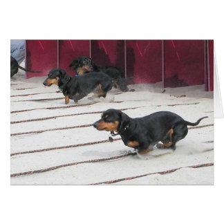 Wiener Dogs Races Card