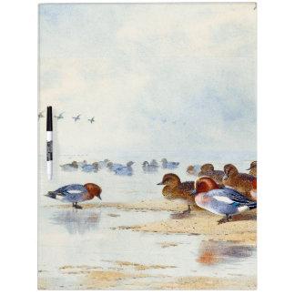Wigeon Teal Duck Birds Wildlife Dry Erase Board