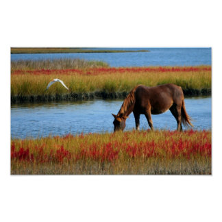 Wild About Horses Poster