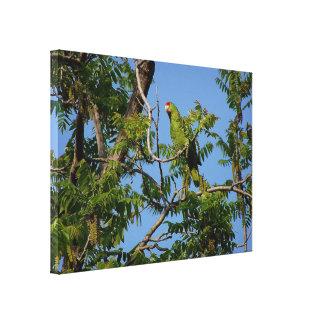 Wild Amazon Parrot Birds Animals Wildlife Canvas Print