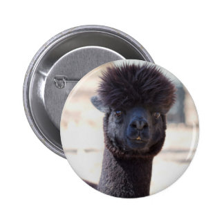 Wild and Crazy Alpaca Hair Style Pinback Buttons
