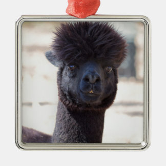 Wild and Crazy Alpaca Hair Style Silver-Colored Square Ornament