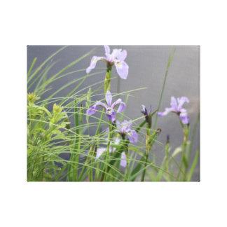 Wild Arctic Iris Stretched Canvas Print