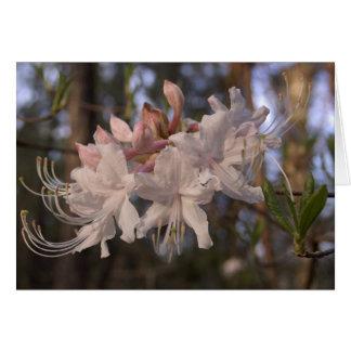 Wild Azalea Card