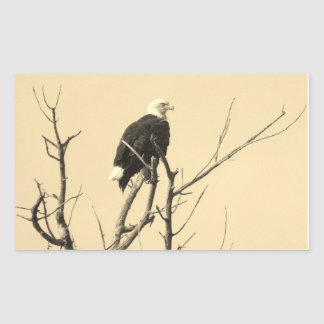 Wild Bald Eagle Stickers