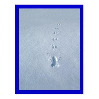 Wild Bird Footprints in Snow Postcard