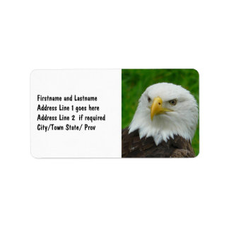 Wild Bird Photography - American Bald Eagle