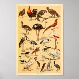 Wild Birds Collection Flamingo Ostrich Print