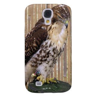 Wild Birds: Red-Tailed Hawk