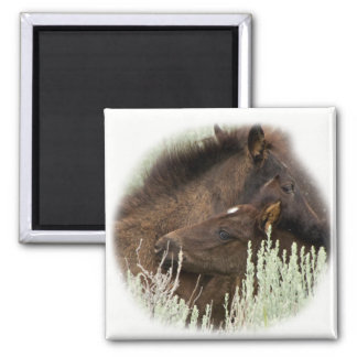 Wild Black Mustang Foal Brothers Magnet
