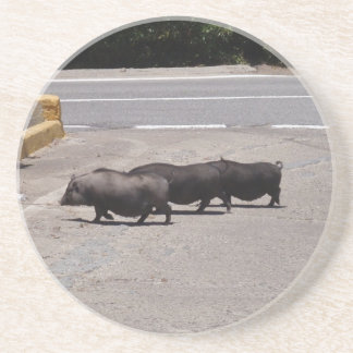 Wild Black Pigs Coaster