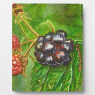 Wild Blackberries ripening in Summer Plaque