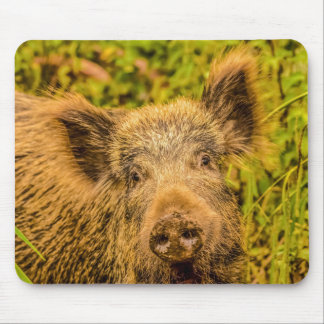 Wild Boar Mouse Mat