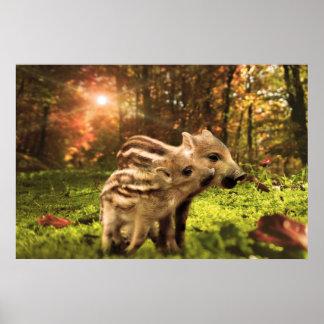 Wild boar piglets poster