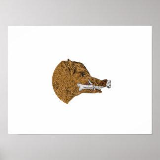 Wild Boar Razorback Bone In Mouth Drawing Poster