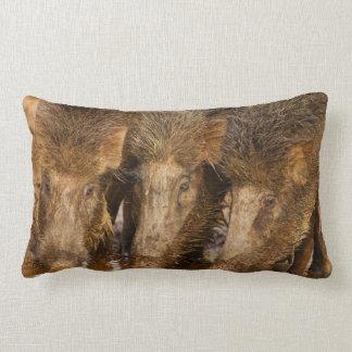 Wild Boars drinking water in the waterhole Lumbar Pillow