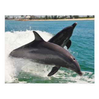 Wild Bottlenose Dolphins Jumping Sanibel Postcard
