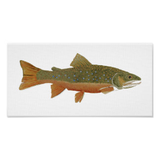 Wild Brook Trout Poster