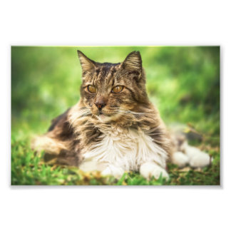 Wild Brown Cat Photo Print