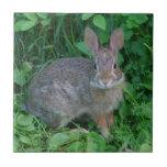 Wild Brown Rabbit Animal Tiles