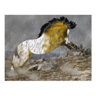 Wild Buckskin Appaloosa Horse Postcard