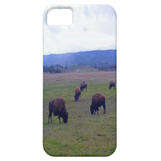 Wild Buffaloes Case For The iPhone 5