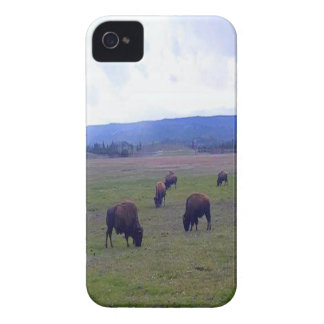 Wild Buffaloes Case-Mate iPhone 4 Cases
