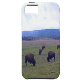 Wild Buffaloes iPhone 5 Cases