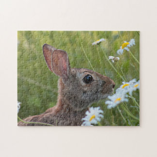 Wild bunny in the daisies jigsaw puzzle
