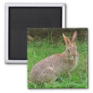 Wild Bunny Magnet