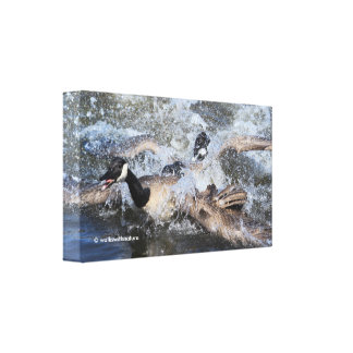 Wild (Canada) Goose Chase: The Spat at Piper Spit Canvas Print