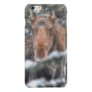 Wild Canadian Moose in Winter Forest