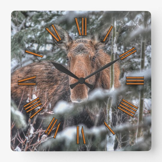 Wild Canadian Moose in Winter Forest Clock