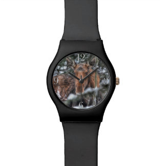 Wild Canadian Moose in Winter Forest Wrist Watches