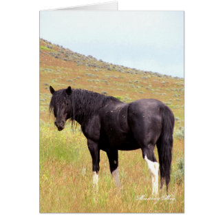 Wild Card~ Band Stallion of Steens Card