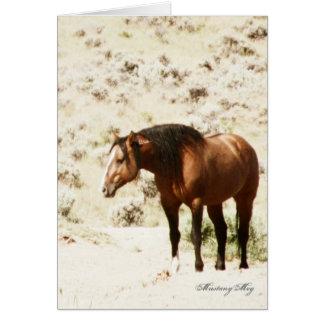Wild Card~ Honor, Stallion of Steens Card
