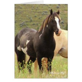 Wild Card~ Majesty, Band Stallion on Steens Card
