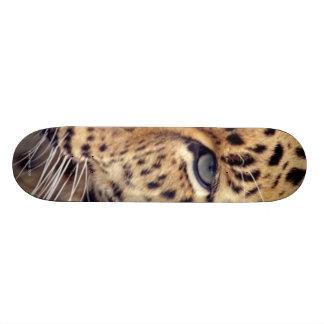 Wild Cat Skate Board