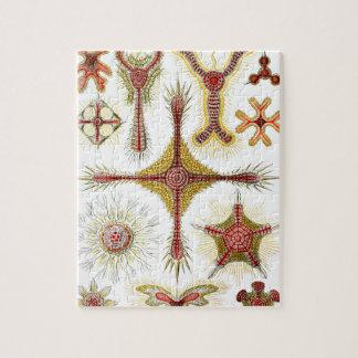 Wild Chamomile by Ernst Haeckel, Vintage Nature Jigsaw Puzzle