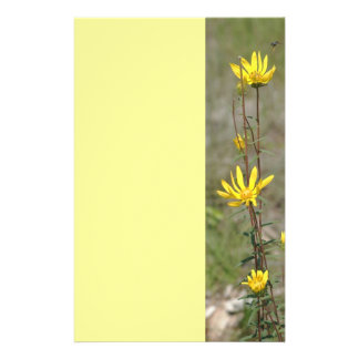 Wild Daisies Stationery