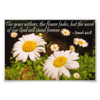 Wild Daisies with Isaiah 40:8 Photo Print
