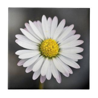 Wild Daisy White and Yellow Ceramic Tiles