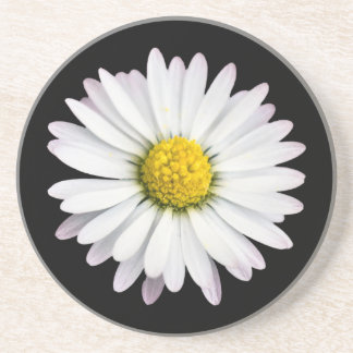 Wild Daisy White and Yellow Flower Coaster